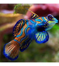 Zeewatervissen